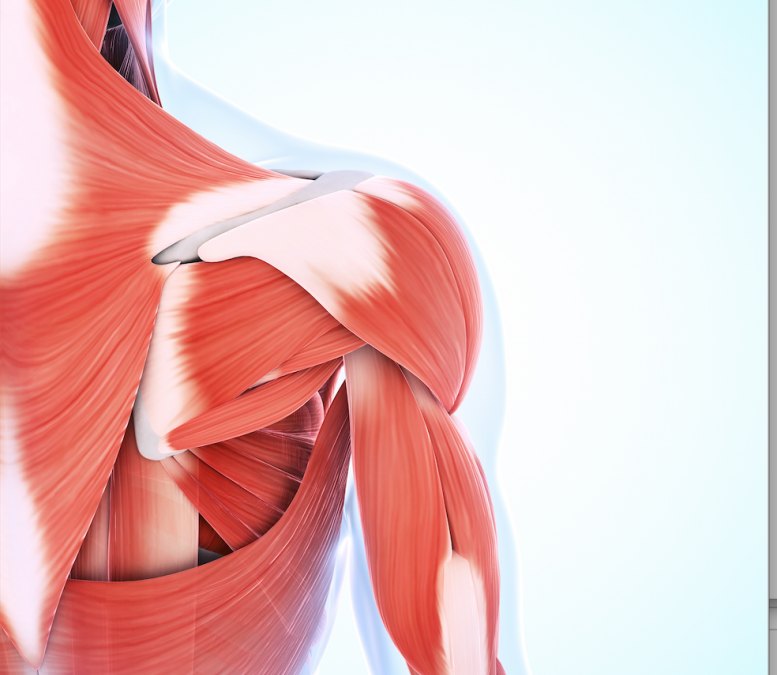 What is Fascia? -